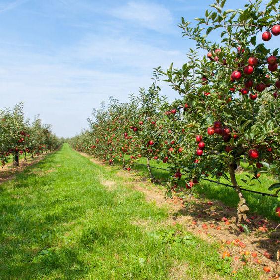 Unser Obstgut finden